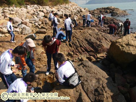 an analysis of the zonation on rocky shore Rocky shore study aim the aim of this investigation is to find where the lower, middle and upper zones on the rocky shore start and end by looking at the species.